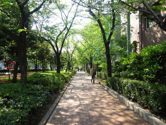 江戸博 横の散歩道