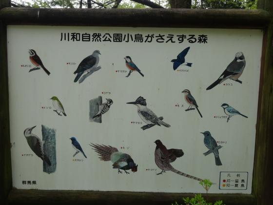 川和自然公園 野鳥
