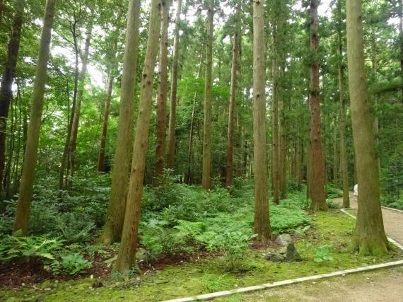 弥彦神社 その1