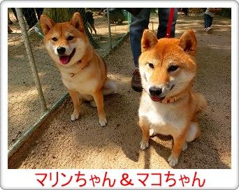 マリン&マコちゃん