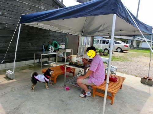 君田のひまわり (24)