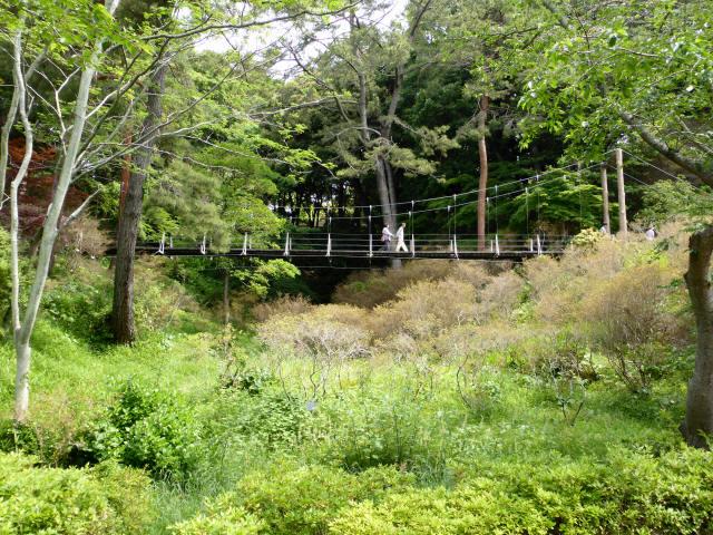 フラワーパーク吊橋0