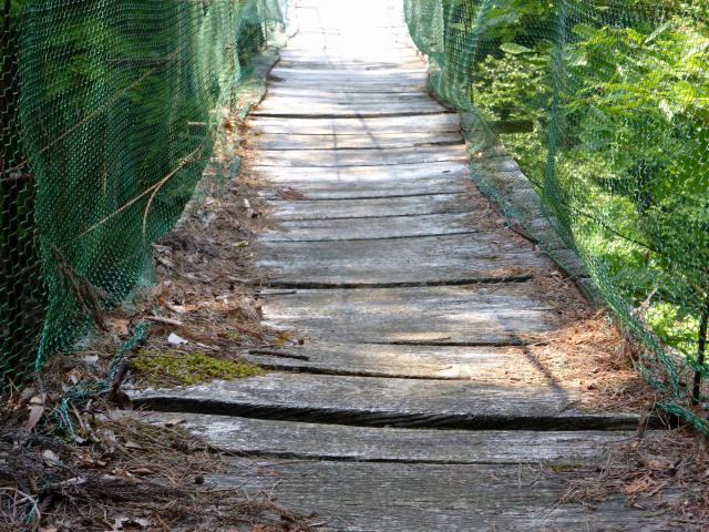 みどり湖の吊橋5