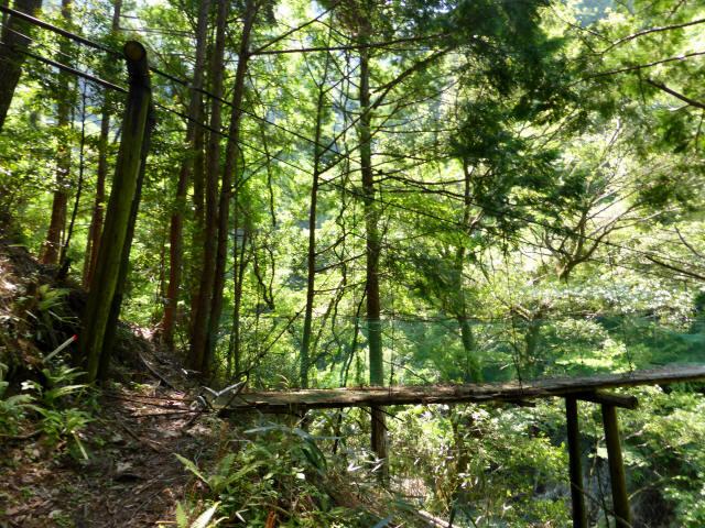 みどり湖の吊橋9