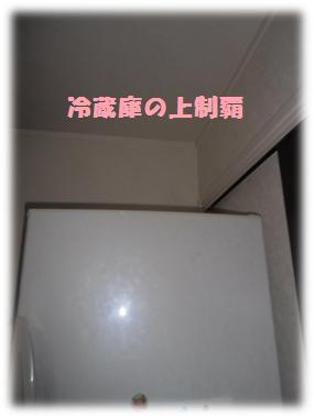 冷蔵庫の上制覇