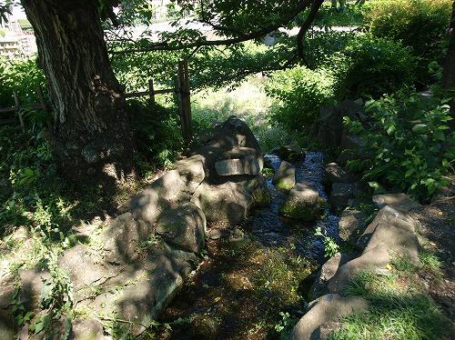 野川への流