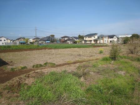 大角豆2012-111