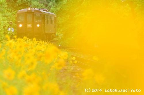 DSC_1265_01.jpg