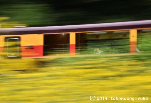 DSC_2527t_01.jpg