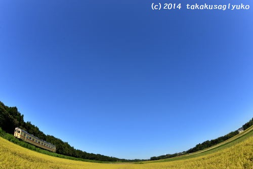 DSC_5945_01.jpg