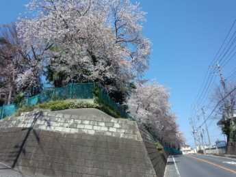 2014-4-8高校桜2