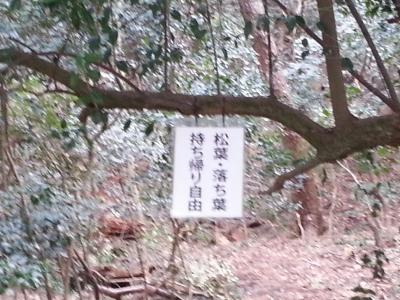 琴弾公園④