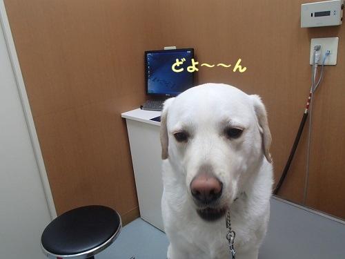 14狂犬病4
