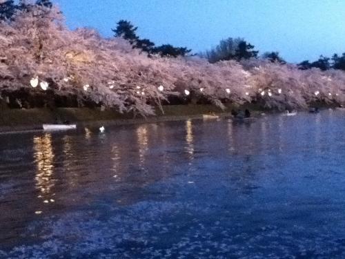 ボート桜③ (500x375)