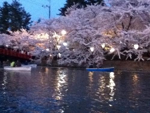 ボート桜④ (500x375)