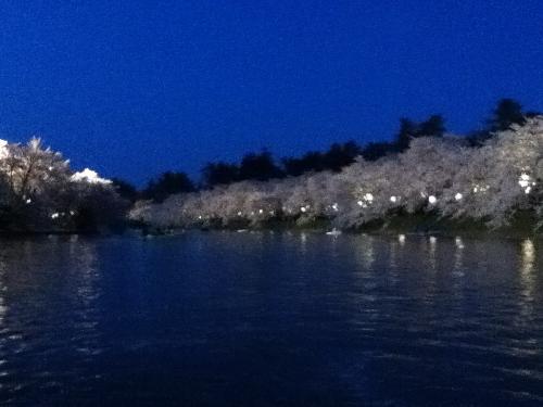ボート桜⑤ (500x375)