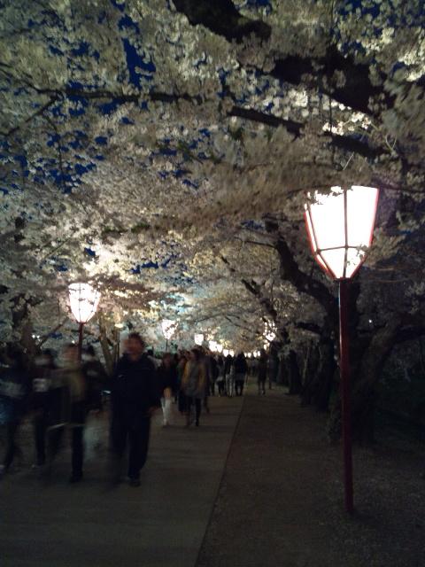 桜のトンネル④