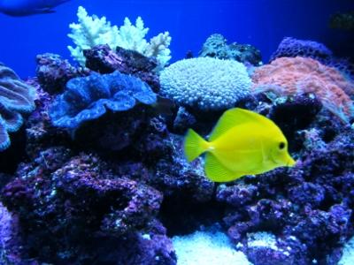 熱帯魚 (400x300)