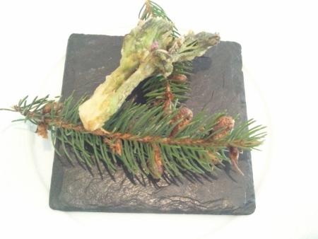 山菜(タラの芽)天ぷら (450x338)