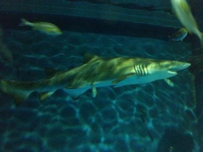 サメ① (400x300)