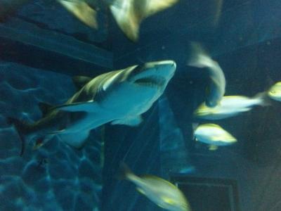 サメ② (400x300)