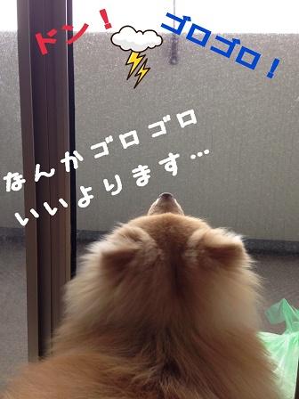 写真_1[2]