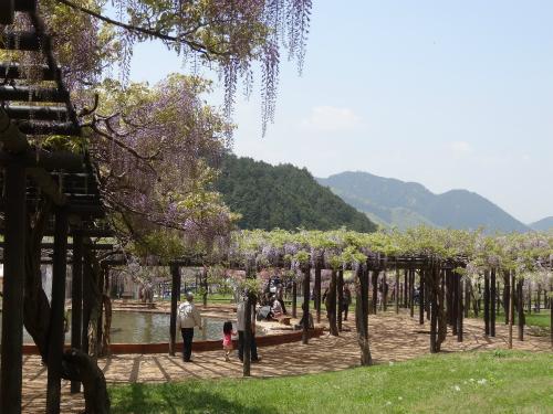 大町藤公園