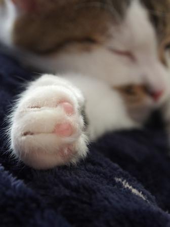こっちは手