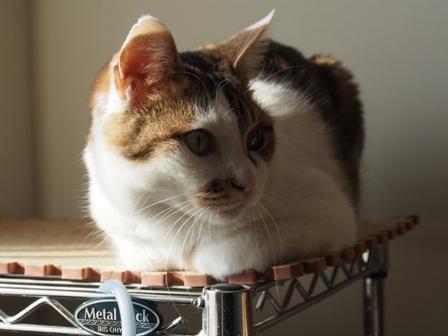 垂れている事に気づいた猫