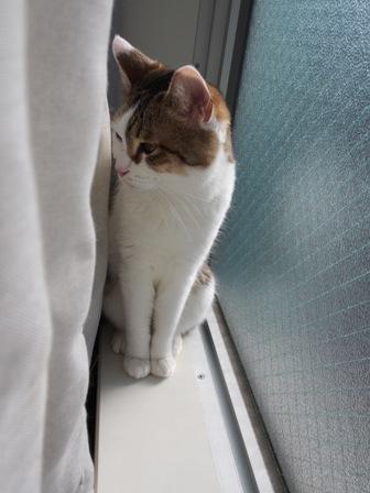 カーテン裏は秘密の場所♪