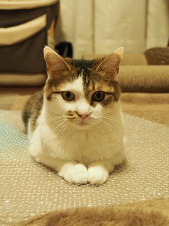 睨んでいなければ可愛い猫♪