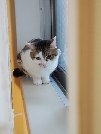 窓辺にたたずむ猫