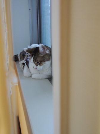 窓辺でゴロン