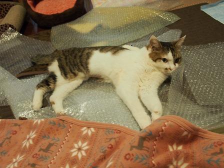 プチプチの海で漂う猫