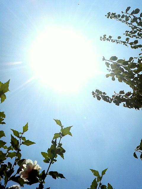 夏本番 太陽