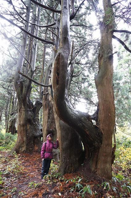幻想の森-1