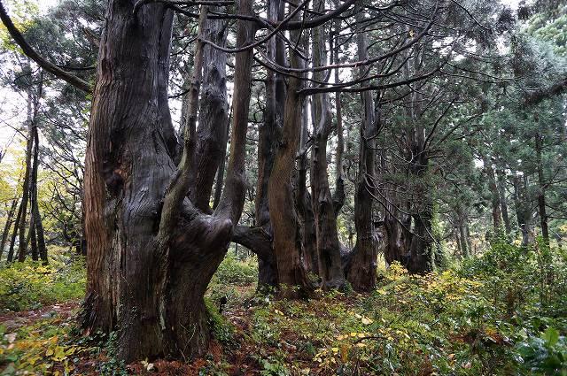 幻想の森-2