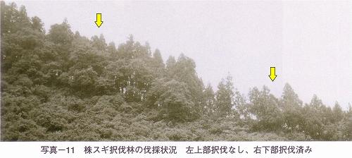 s-写真-11