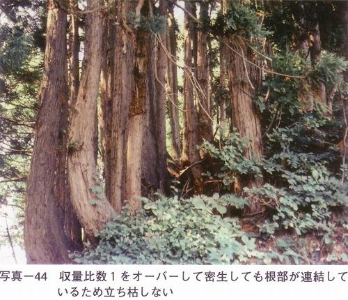 s-写真-44