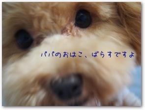 Teo 2014-08-08 (7)