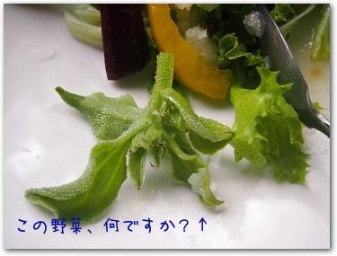 Teo 2014-09 Yamanakako (3)