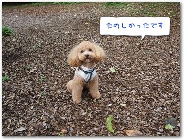 Teo 2014-09 Yamanakako (11)