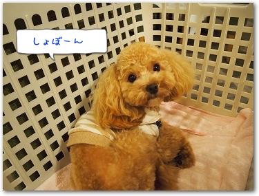 Teo 2014-09 Yamanakako (13)