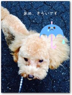 Teo 2014-09 Yamanakako (20)