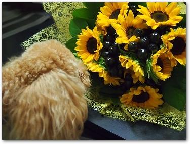 Teo 2014-09 Flower (1)