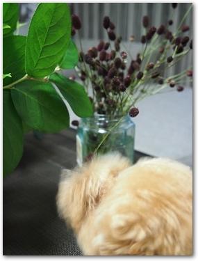 Teo 2014-09 Flower (4)