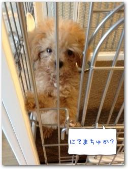 Teo 2014-09 Pinosuke (2)