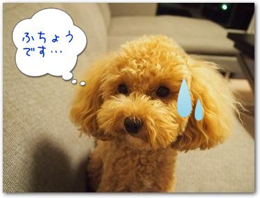 Teo 2014-09 Pinosuke (3)