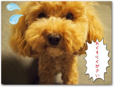Teo 2014-09 Pinosuke (5)