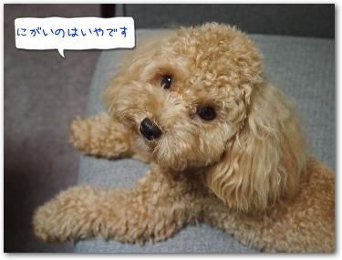 Teo 2014-09 Pinosuke (7)
